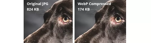 Two Images That Show The Different Image Qualities of JPGs and WebP Compressed Formats